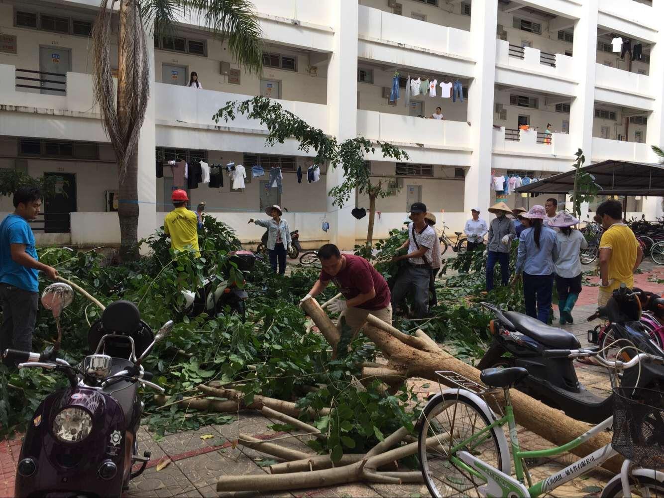 """台风""""莎莉嘉""""灾后恢复情况"""